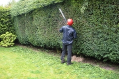 6-Hedge-trimming-1